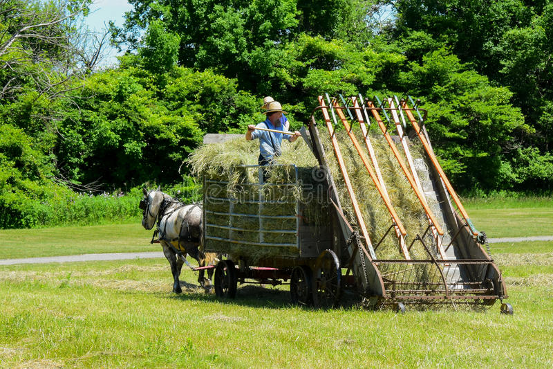 Agricoltori di Amish che fanno fieno immagine stock
