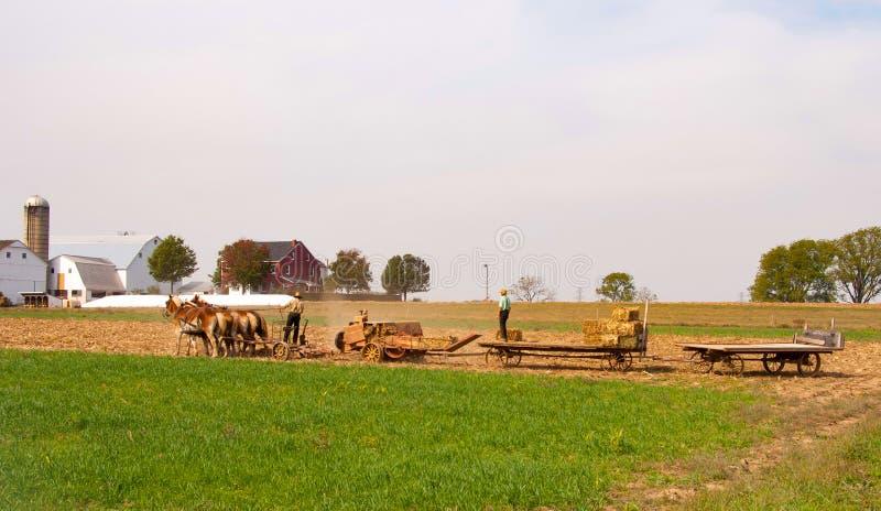 Agricoltori di Amish che portano nel fieno immagine stock