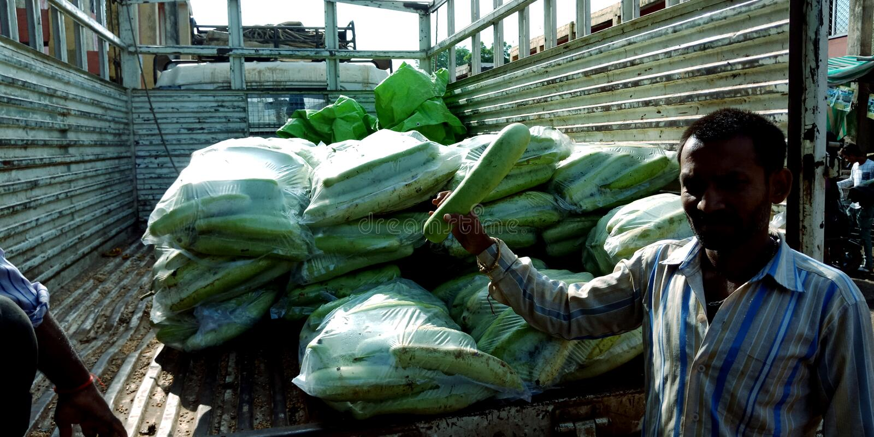 Agricoltori indiani di un villaggio che mostrano zucca alla macchina fotografica immagine stock