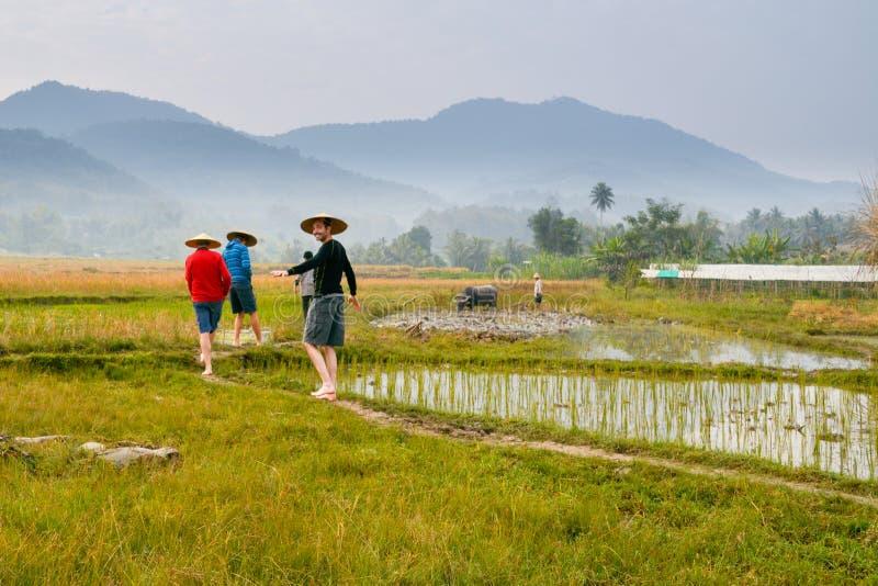 Agricoltori sul giacimento del riso nel Laos immagini stock libere da diritti