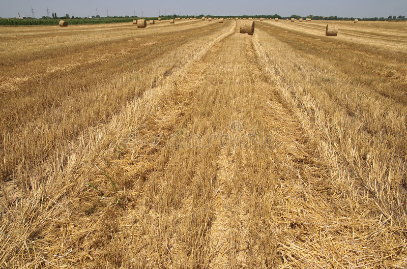 Download Agricoltura fotografia stock. Immagine di serbia, agricolo - 7315788