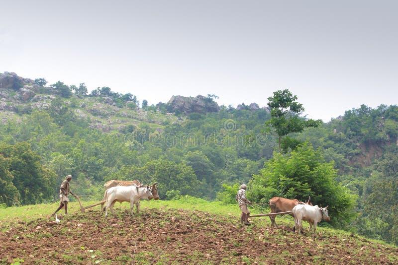 Agricoltura antica, India immagine stock libera da diritti