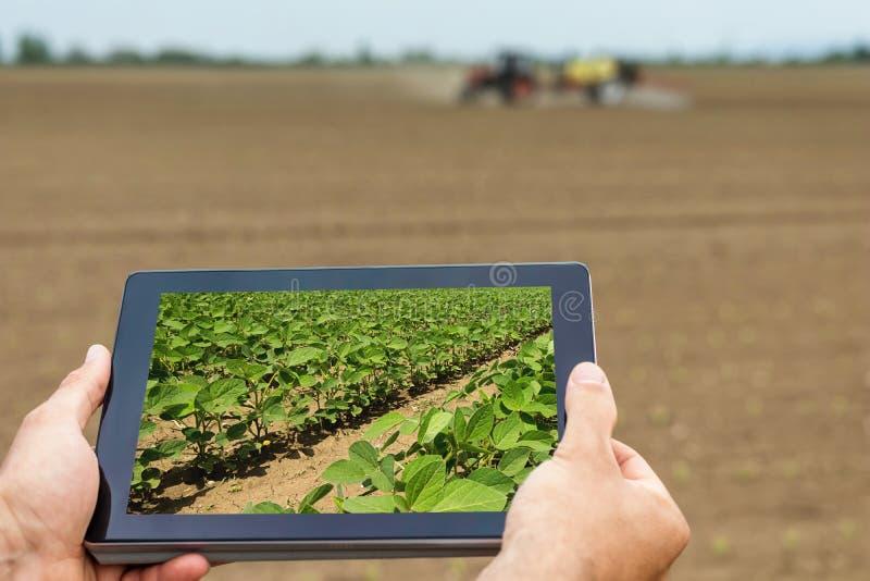 Agricoltura astuta Agricoltore che usando piantatura della soia della compressa Agri moderno fotografia stock libera da diritti