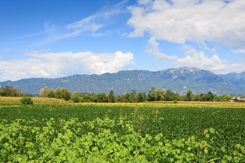 Agricoltura, campo della soia fotografia stock