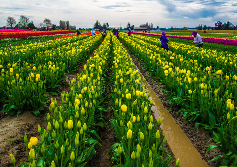 Agricoltura dei fiori immagini stock