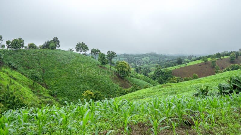Agricoltura della montagna, immagine stock