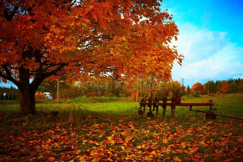 Agricoltura dello strumento accanto ad un albero di autunno fotografia stock libera da diritti