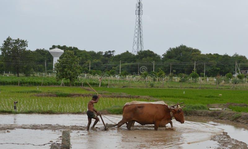 Agricoltura e coltivare in India fotografia stock libera da diritti