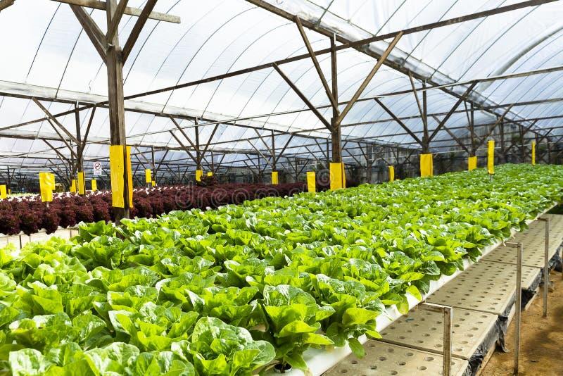 Agricoltura idroponica della piantagione immagine stock
