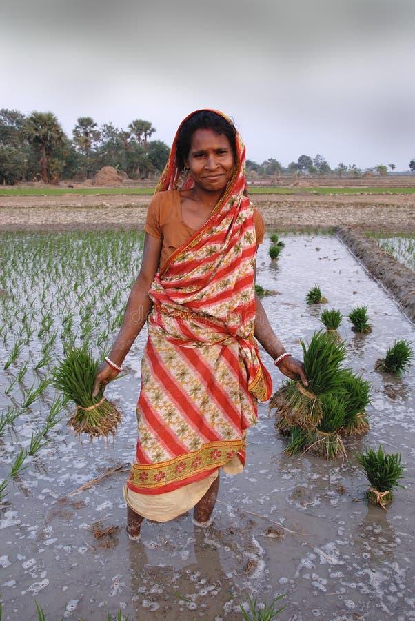 Agricoltura in India immagini stock libere da diritti