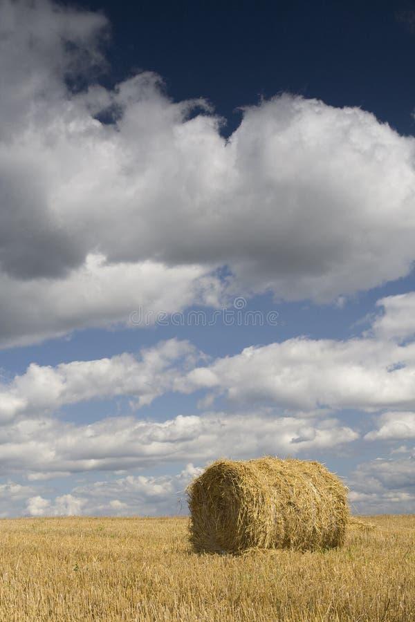 Agricoltura - mucchio di fieno immagine stock
