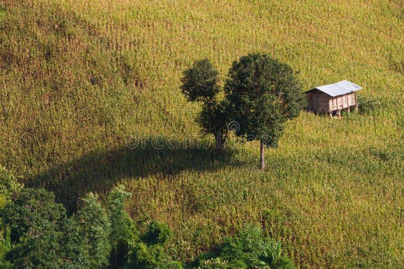 Agricoltura tipica della montagna con cereale che cresce dal lato ripido di una montagna con poca tettoia immagini stock