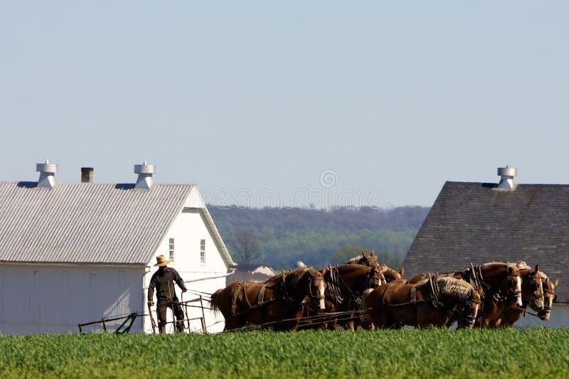 Agricoltura tradizionale con il cavallo di aratro fotografia stock