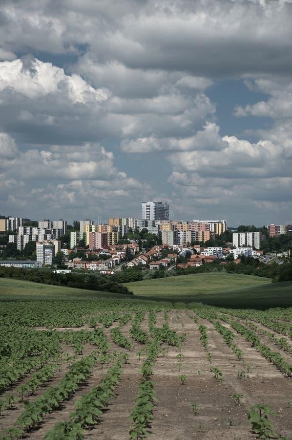 Agricoltura urbana fotografie stock