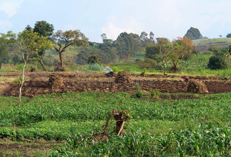 Agricoltura vicino alle montagne di Rwenzori fotografie stock