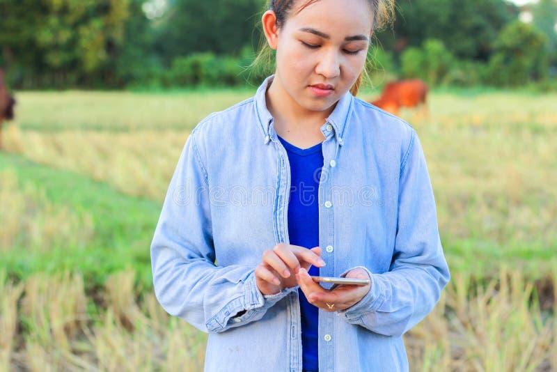 Agriculteur à l'aide du téléphone numérique dans le domaine cultivé de riz image stock