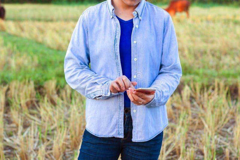 Agriculteur à l'aide du téléphone numérique dans le domaine cultivé de riz image libre de droits