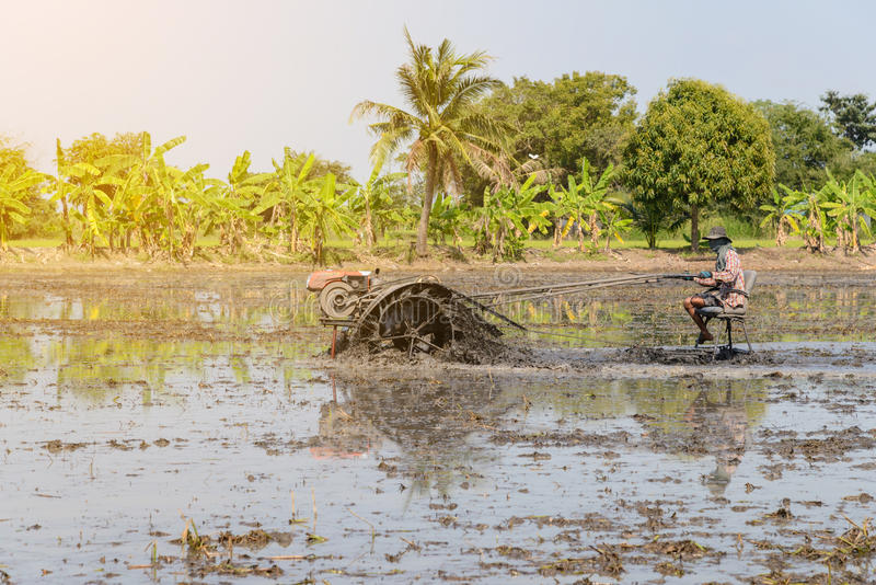 Agriculteur à l'aide du tracteur de talle dans le domaine de riz photo libre de droits