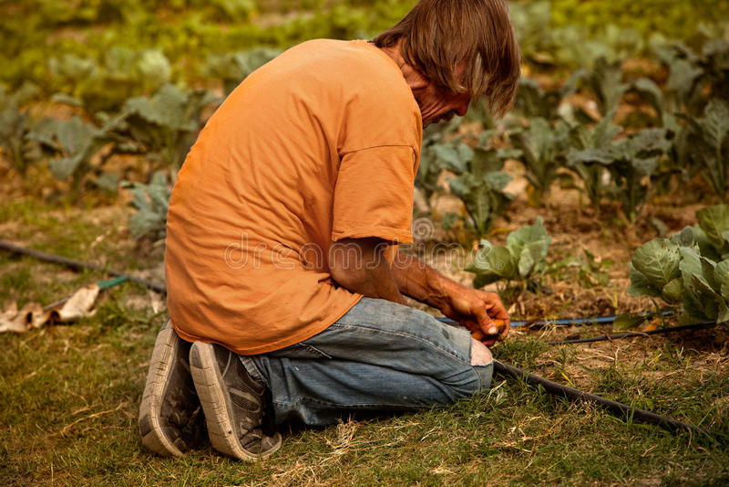 Agriculteur étendant l'irrigation photo libre de droits