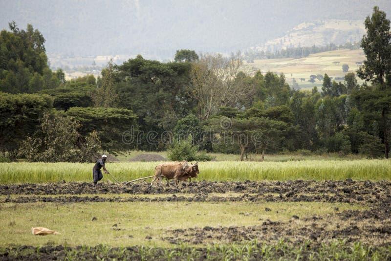 Agriculteur éthiopien photos stock