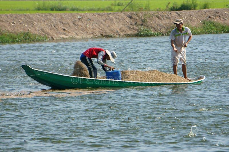 Agriculteur asiatique alimentant, étang à poissons, pêche photos libres de droits