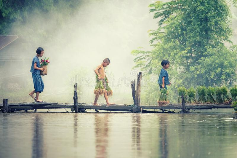 Agriculteur asiatique d'enfants sur la croix de riz le pont en bois avant développé dans la rizière photographie stock libre de droits