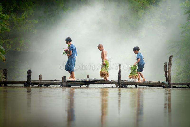 Agriculteur asiatique d'enfants sur la croix de riz le pont en bois avant le g photographie stock