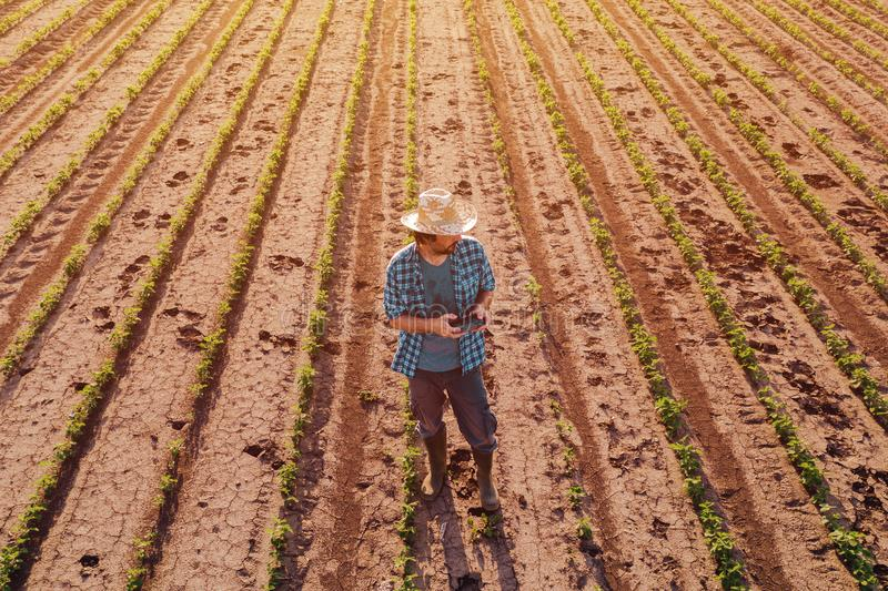 Agriculteur avec le contrôleur à distance de bourdon dans le domaine de soja, vue aérienne photos libres de droits