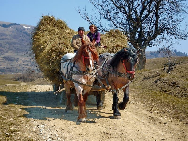 Agriculteur avec le foin de cheval et de chariot en Roumanie photographie stock libre de droits