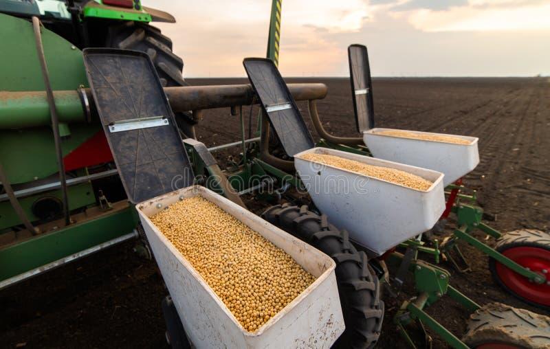 Agriculteur avec le tracteur semant des cultures de soja au champ agricole photo stock