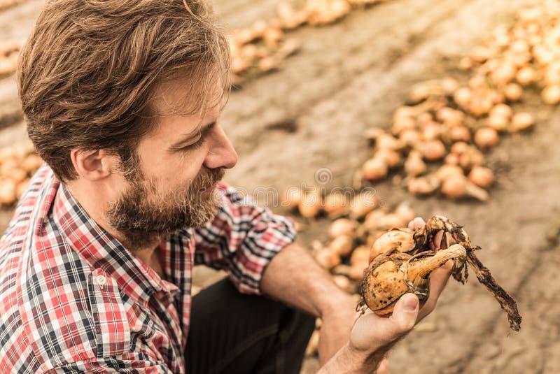 Agriculteur caucasien dans le domaine d'oignon de contrôle de chemise de plaid photos stock