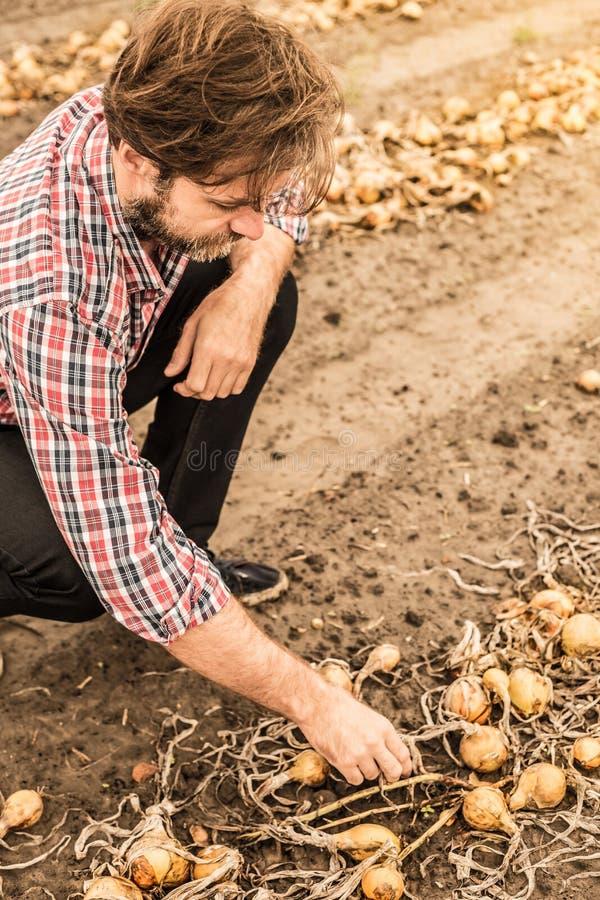 Agriculteur caucasien dans le domaine d'oignon de contrôle de chemise de plaid images libres de droits