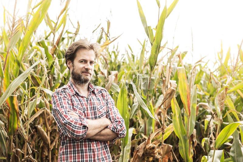 Agriculteur caucasien dans le domaine de chemise et de maïs de plaid - agriculture images libres de droits