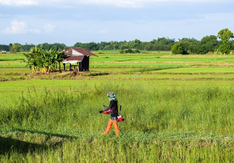 Agriculteur coupant l'herbe par la tondeuse à gazon Herbe de fauchage d'homme par le brushcutter image libre de droits