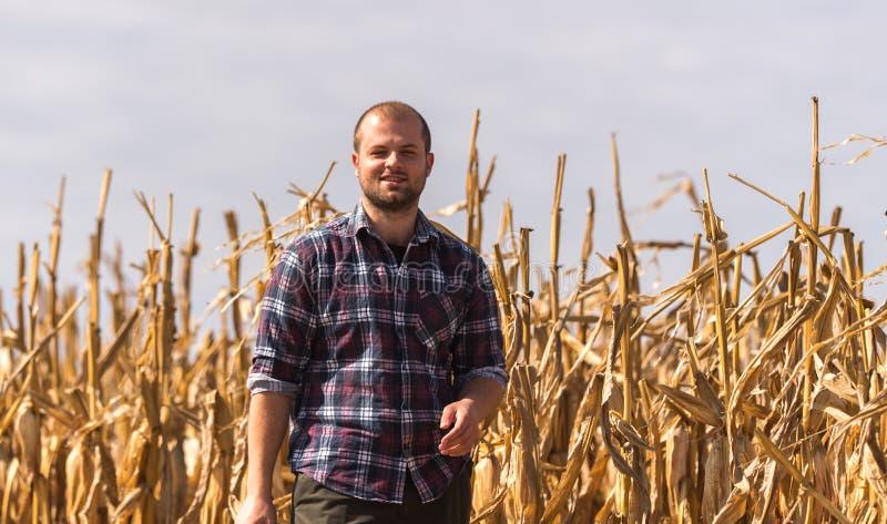 Agriculteur dans des domaines de maïs image libre de droits