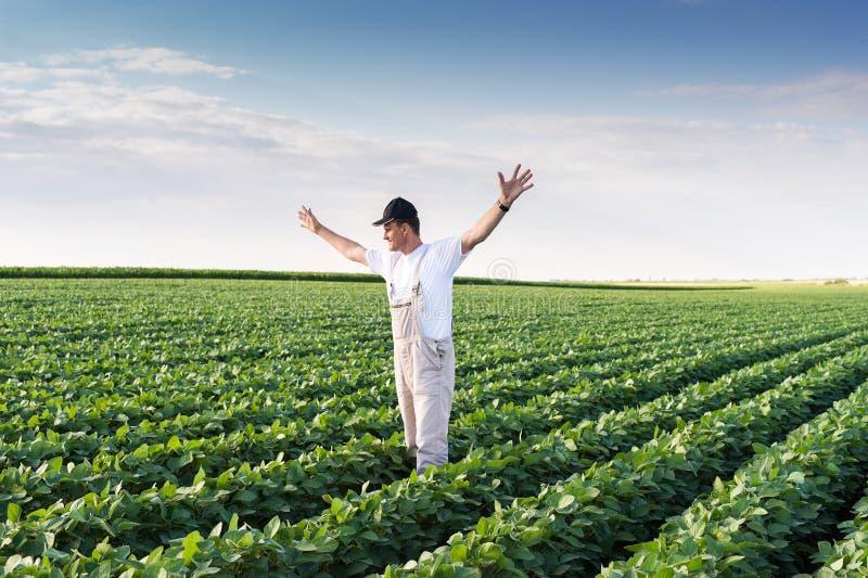 Agriculteur dans des domaines de soja image stock