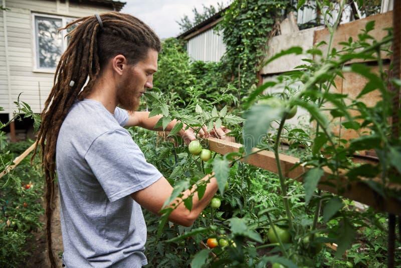 Agriculteur dans le jardin photographie stock libre de droits