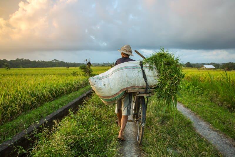Agriculteur de Balinese avec une bicyclette Scène rurale de balinese photographie stock