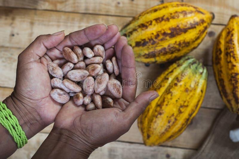 Agriculteur de cacao photos libres de droits