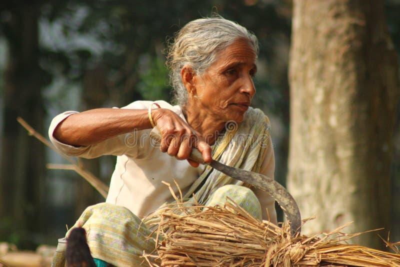 Agriculteur de dame âgée au Bangladesh images stock
