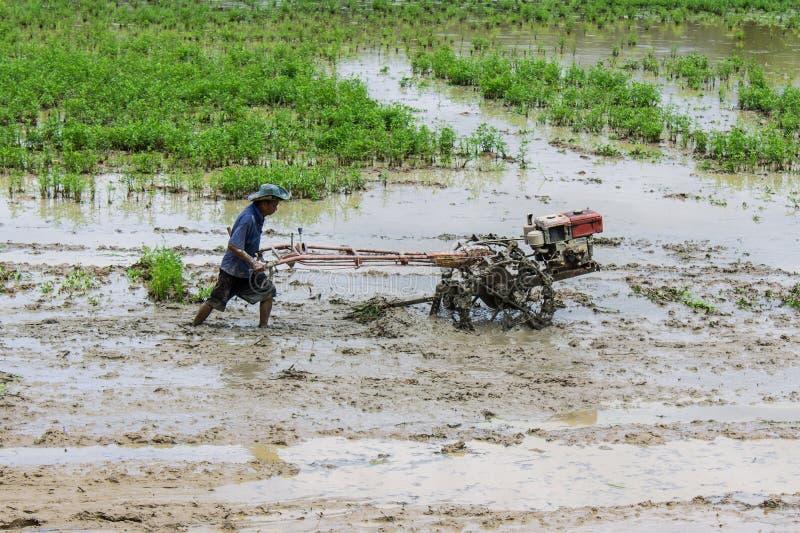 Agriculteur de l'Asie à l'aide du tracteur de talle dans le domaine de riz photographie stock