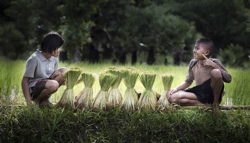 Agriculteur de petit garçon et de fille sur les champs verts photo libre de droits
