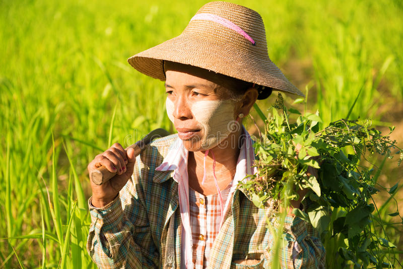 Agriculteur féminin asiatique traditionnel photo libre de droits