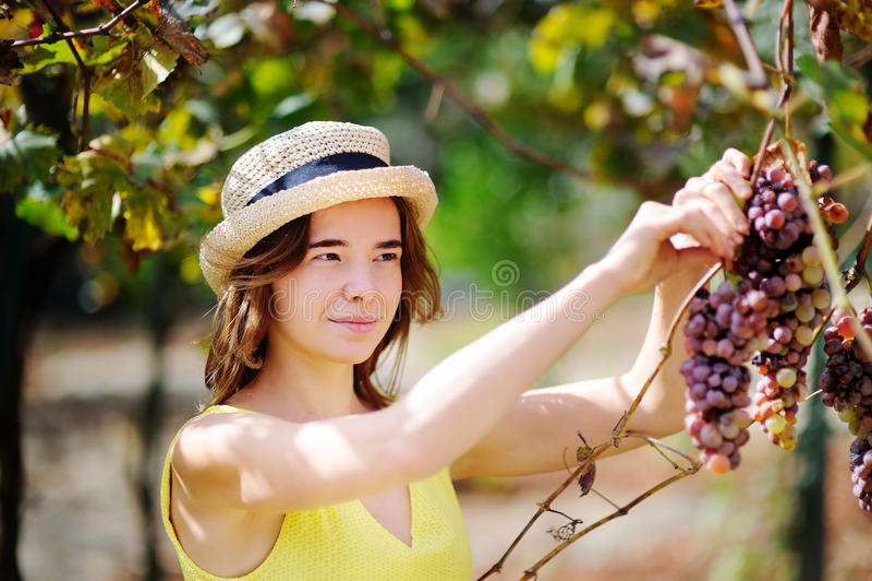 Agriculteur féminin heureux travaillant dans le verger de fruit photos libres de droits