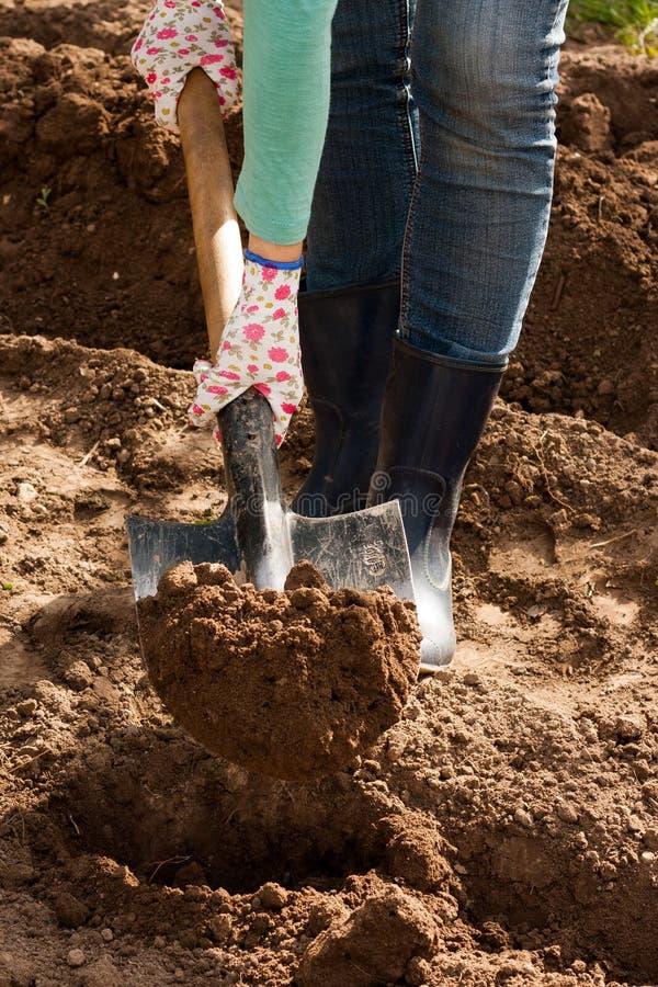 Agriculteur Hold With Ground de mains de femmes photo libre de droits