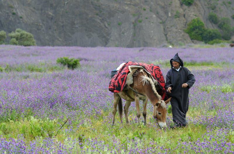 Agriculteur marocain photo stock