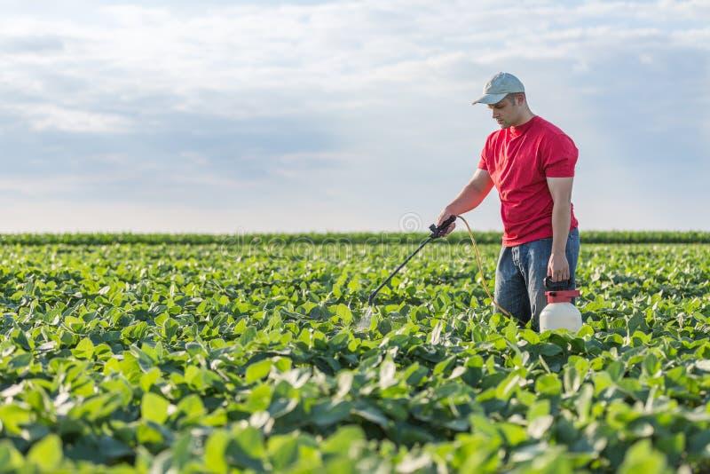 Agriculteur pulvérisant des usines de soja vert image stock