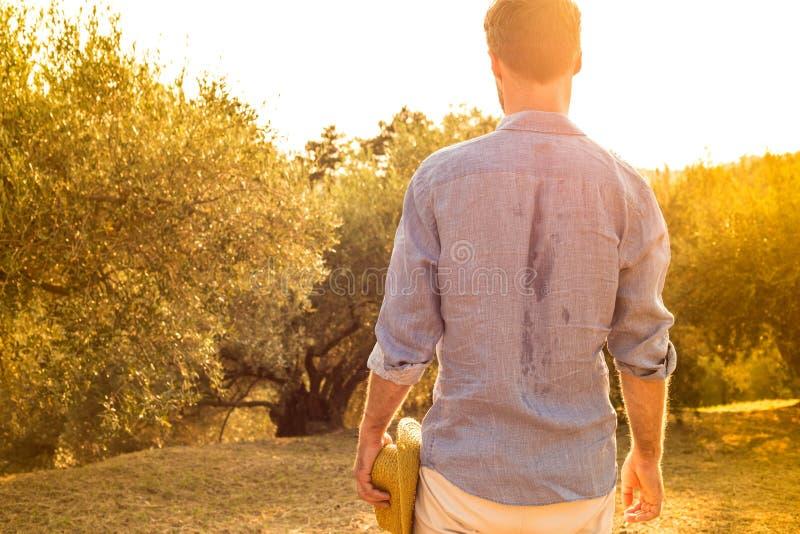 Agriculteur se tenant devant un verger olive - agriculture images libres de droits