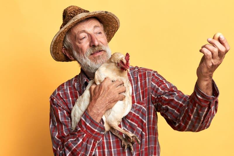 Agriculteur supérieur amical regardant fièrement l'oeuf frais, tenant la poule disponible images stock