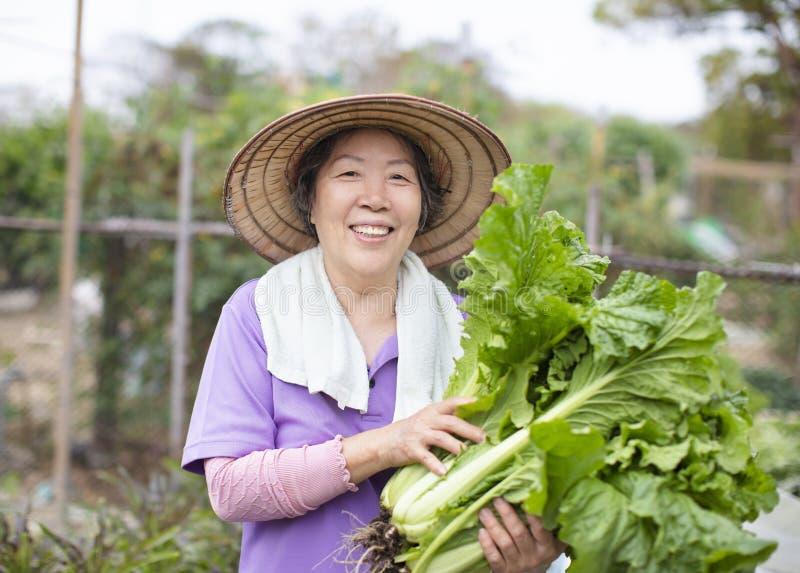 Agriculteur supérieur féminin avec des légumes photos stock